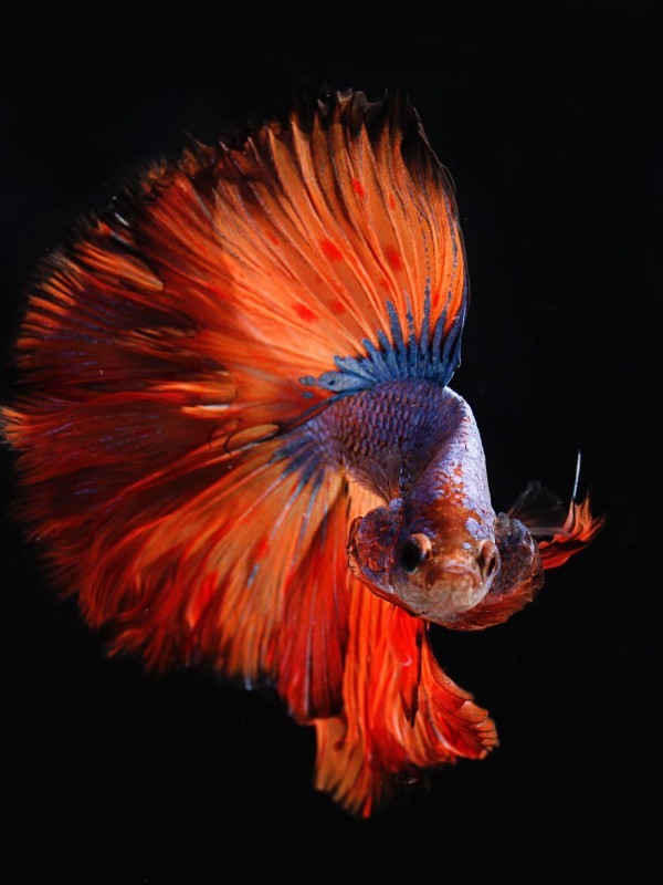 A colorful fish