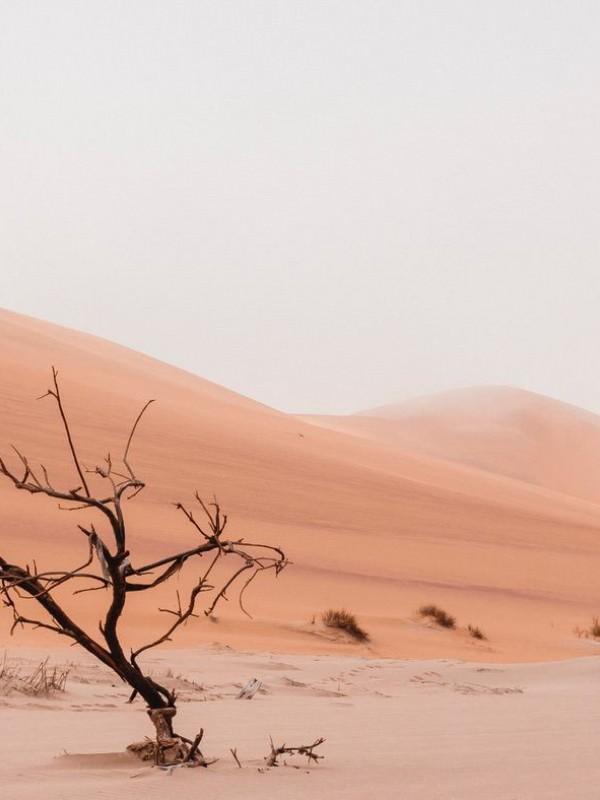 A dead tree in the desert